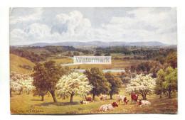 A R Quinton Postcard No. 1359 - The Vale Of Evesham - Quinton, AR