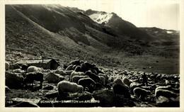 Schafalm Stanton Am Arlberg  MOUTON SHEEP OVEJA SCHAF ANIMALES ANIMALS DIEREN ANIMAUX - Other
