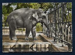 Lyon - Parc De La Tête D'Or : L'Eléphant - Lyon 6