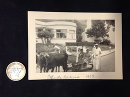 FOTO PORTUGAL - ILHA DA MADEIRA - 1952 - BOIS A PUXAR CARRINHO TÍPICO - Luoghi