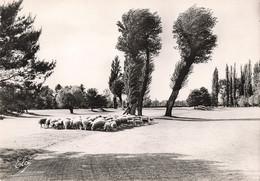 03 Vichy Le Golf Troupeau De Moutons Mouton CPSM GF - Vichy