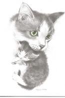 Chat   Dessin  Illustration Jonah's Workshopcarte Double Format 18x13 Cm Lot De 3 - Gatti