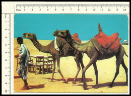 MC167 ASIA CAMMELLI CARAVAN CAMELS FOR RIDING HAWKBAY KARACHI PAKISTAN VG 1976 STAMP 1961 - Pakistan