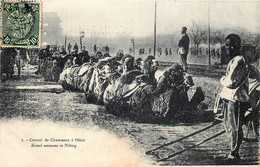 Chine - Pékin - Convoi De Chameaux - Chine