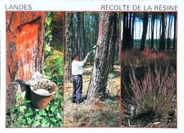 ► CPSM  Landes Récolte De La Résine - Other
