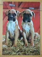 KOV 504-10 - DOG, CHIEN, HUND - Dogs