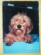 KOV 504-11 - DOG, CHIEN, HUND, - Dogs