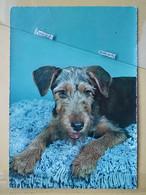 KOV 504-12 - DOG, CHIEN, HUND, - Dogs