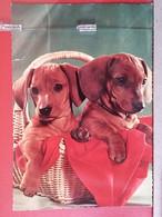 KOV 504-13 - DOG, CHIEN, HUND, - Dogs