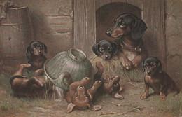 Motiv - Hund - Hunde