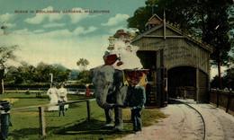 Elephants : Zoological Gardens - MELBOURNE  VICTORIA   ELEFANTES ELEFANT ZOO     AUSTRALIA - Melbourne