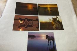 """LOT DE 5 CARTES """"CHEVAUX AU COUCHER DE SOLEIL"""".... - 5 - 99 Postcards"""