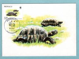 Carte Maximum Monaco 1991 - Protection De La Nature - WWF - Tortue Hermann - Couple De Tortue - YT 1805 - Maximum Cards