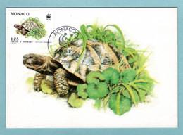 Carte Maximum Monaco 1991 - Protection De La Nature - WWF - Tortue Hermann - Tortue Dans L'herbe - YT 1806 - Maximum Cards