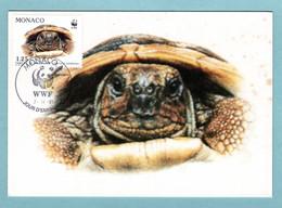 Carte Maximum Monaco 1991 - Protection De La Nature - WWF - Tortue Hermann - Tortue Vue - YT 1807 - Maximum Cards