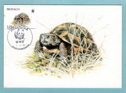 Carte Maximum Monaco 1991 - Protection De La Nature - WWF - Tortue Hermann - Tortue Et Feuilles - YT 1808 - Maximum Cards