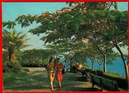 08973 Sochi Park Near The Hotel Seaside Promenade Palm Girl Resort 1981 USSR Soviet Card Clean - Russia