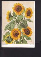 D42 /   Bischof & Klein , Lengerich / Otto Vaeltl , Sonnenblumen Um 1940 - Unclassified