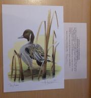 A.Buzin Genummerde Kleurtekening Met Certificaat 72 / 400 Zie Foto - 1985-.. Birds (Buzin)