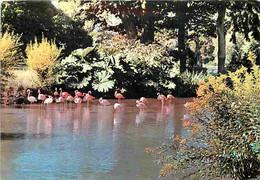 Animaux - Oiseaux - Flamants Roses Et Rouges - Parc Zoologique De Cleres - CPM - Voir Scans Recto-Verso - Birds