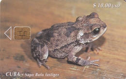 CUBA - Frog, Sapo Bufo Fustiger, Tirage 20000, 08/99, Used - Cuba