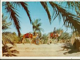 CPM ,Algérie , N°8 - 45 , Le Sud Fascinant ,Ed. Re-AR ,1983, Avec Timbres - Unclassified