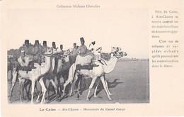 Le Caire Aïn-Chams Manoeuvre Du Camel Corps Douaniers Sur Des Chameaux à La Poursuite De Contrebandiers - Dogana
