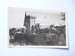 AUBRAC  -  LOZERE - CANTAL - AVEYRON  -  Paturages Dans L'Aubrac - Le Jour De La Montée - Otros Municipios