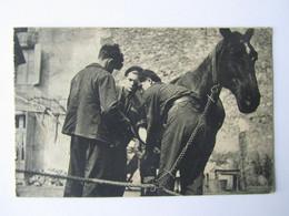Limousin, Centre Des Postillons, Cheval, Ferrage D'un Cheval, La Poste, Formation Professionnelle - Limousin