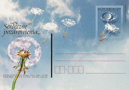 Poland Postcard Cp. 1251: Cordial Greetings Common Dandelion - Postwaardestukken