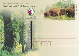 Poland Postcard Cp. 1260: National Park Bialowieza Bison Forest - Postwaardestukken