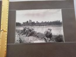 NIM 29171  INDOCHINE - SAIGON ET SA REGION SOUVENIRS D UN LTN DU 2°BATAILLON DU 3°RTM 1948-1951 1  PHOTO - Zonder Classificatie