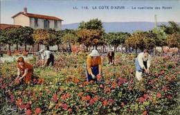Côte D'Azur - La Cueillette Des Roses - Provence-Alpes-Côte D'Azur