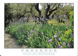 IMAGE DE PROVENCE - Iris Et Oliviers - Provence-Alpes-Côte D'Azur