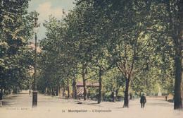 H1406 - MONTPELLIER - D34 - L' Esplanade - Montpellier