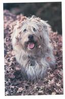 Postcard, Leafy Dog, Unused. Read Description BB - Perros