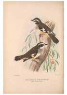 Reproducción/Reproduction 48684395258: The Birds Of Australia. London :Witherby & Co.,1910-1927.. - Sonstige