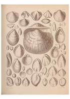 Reproducción/Reproduction 42064767200: An Atlas Of The Fossil Conchology Of Great Britain And Ireland :. Londo... - Sonstige