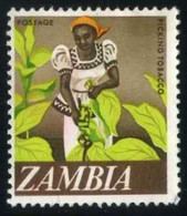 Zambia - Picking Tobacco   Agriculture   Plants (Flora)   Tobacco   Women - Tabak