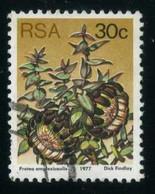 South Africa - Sugarbushes   Clasping-leaf Sugarbush (Protea Amplexicaulis)   Flowers   Plants (Flora) - Sonstige