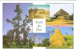 CPM - REPUBLIQUE DE  DJIBOUTI - FORET DU DAY - Djibouti