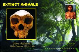 Vignettes De Fantaisie, Extinct Animals , Hominidae (3), Homo Rhodesiensis - Fantasie Vignetten