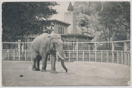 """Budapest Capital Zoo """"Siam"""" The Giant Elephant. His Majesty, The King's Gift. - Hungría"""
