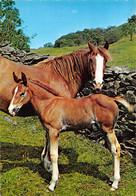 Chevaux (Animaux) - Poulain - Pferde