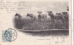 NEVERS (58) : Troupeau De Vaches Dans Leur Pâturage - Nevers