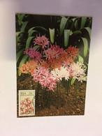 (RR 44) South Africa  / RSA - Set Of 4 Flowers Maxicards / Carte Maximum De Fleurs - Sonstige
