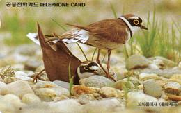SOUTH KOREA - AUTELCA - ANIMALS BIRDS - LITTLE RINGED PLOVER - K - Korea, South