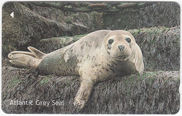JERSEY A-584 Magnetic Telecom - Animal, Seal - 76JERA - Used - [ 7] Jersey Und Guernsey