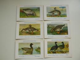 Beau Lot De 60 Cartes Postales De Fantaisie Oiseau H. Dupond Nrs 219 - 278  Mooi Lot Van 60 Postkaarten Vogel Eend - 5 - 99 Postcards