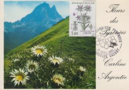 Carte  Maximum   FRANCE   Fleur  Des   Pyrénées  :  Carline      ARGELES  GAZOST  1983 - 1980-89